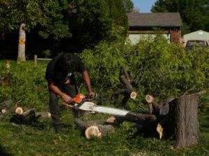 tree removal purga