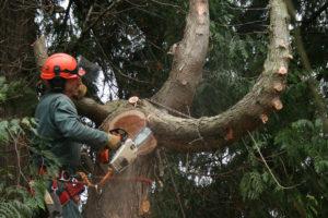 arborist services pine mountain